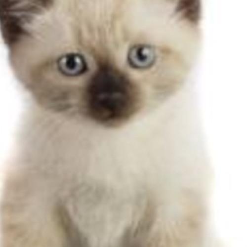 princesskitteycat12345's avatar
