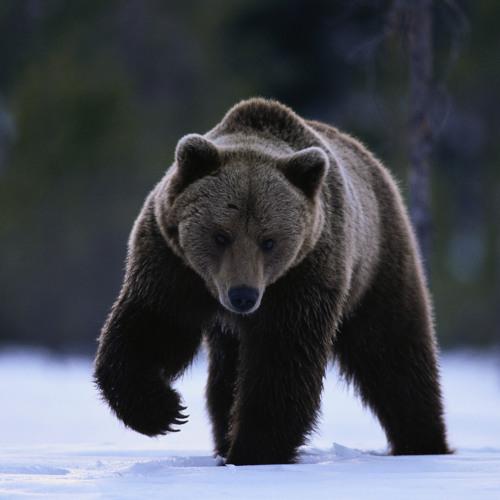 Teddy the Beast's avatar