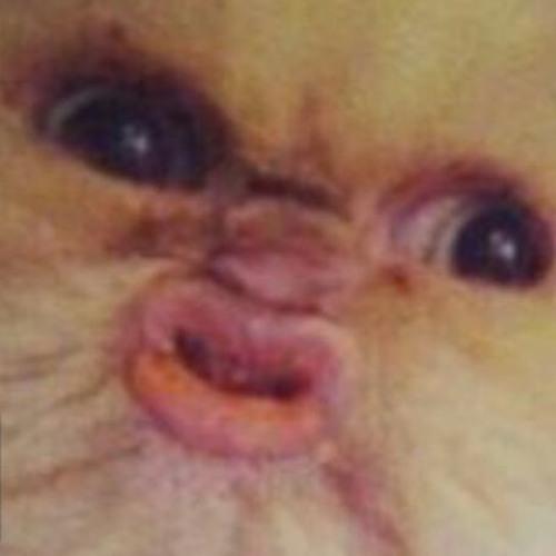 SlothsGoneWild's avatar