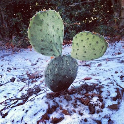 Cactus In The Snow's avatar