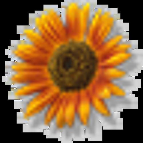 Flower432Hz's avatar
