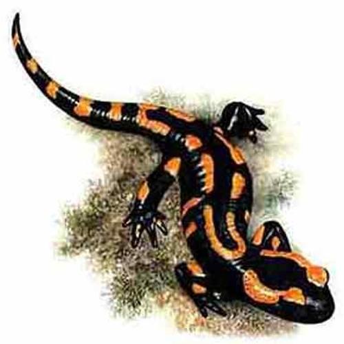 inbeatados's avatar