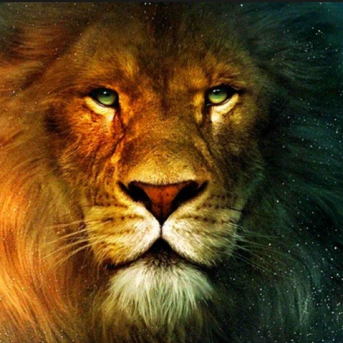KING___LION's avatar