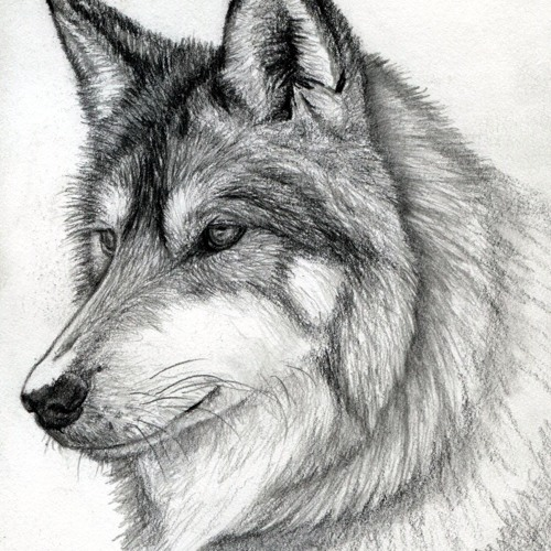 Noisy Wolf's avatar