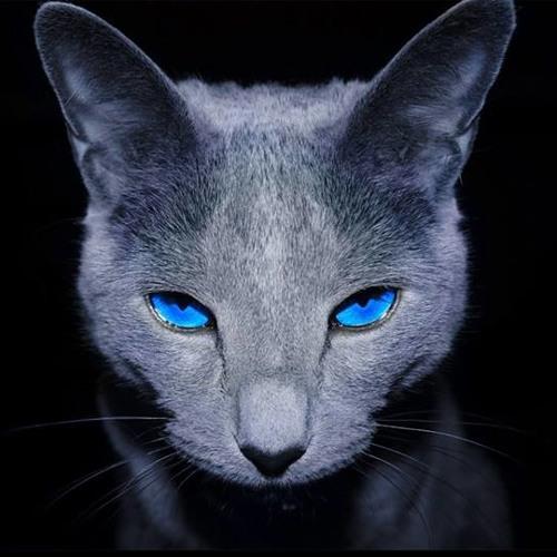 Blue-eyed CAT's avatar