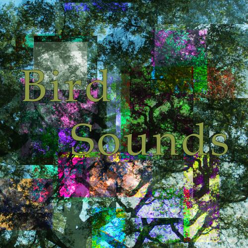 Bird Sounds's avatar
