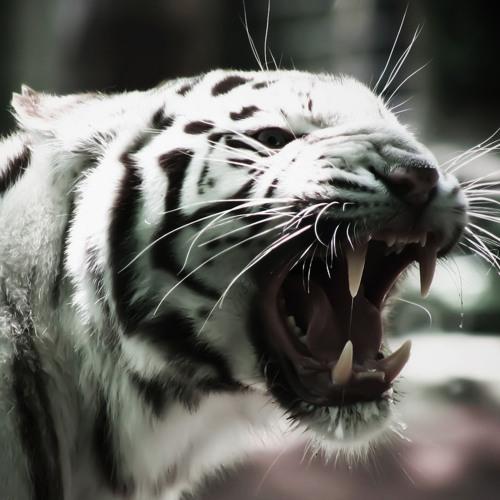 TigerMelody's avatar
