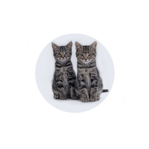The Kittens's avatar