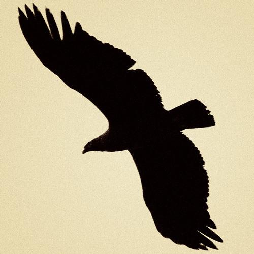 Sereialarm's avatar