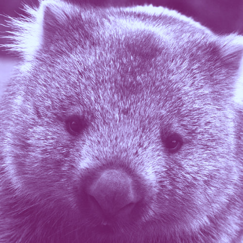 Wavy Wombat's avatar