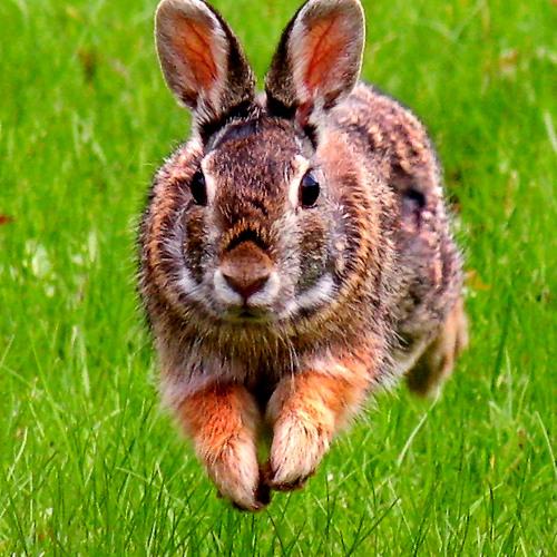 silastherabbit's avatar