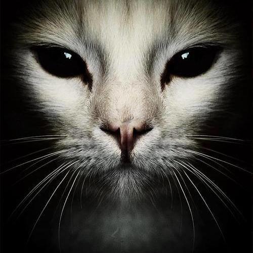 Carolina Ł'b's avatar