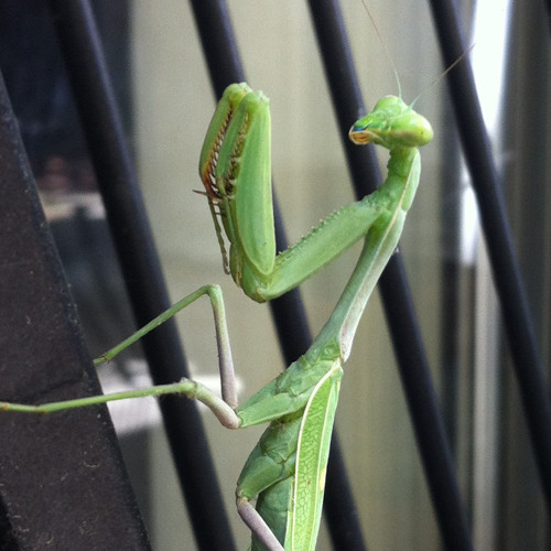 Manguana's avatar