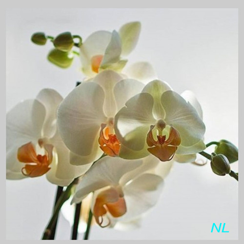 ngoclien8_3's avatar