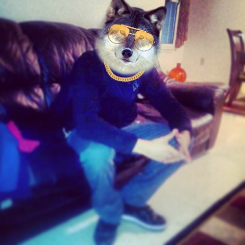 DeeJay Wolfman's avatar