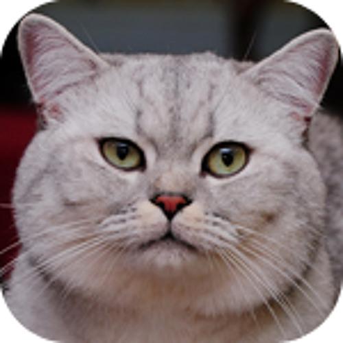 jefferycamacho's avatar