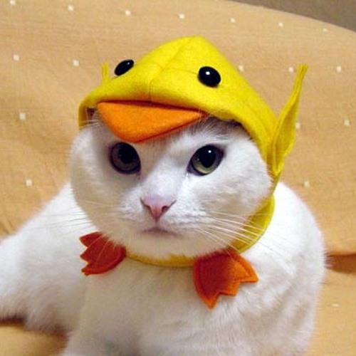 gatopato's avatar