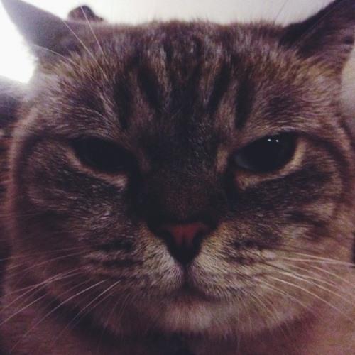 Mimi Mahin's avatar