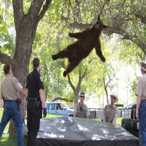jumping bear's avatar