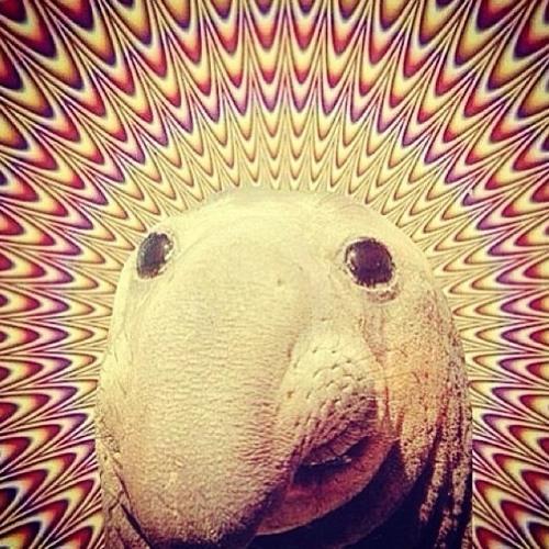Nick Hollman's avatar