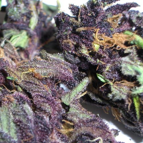 purplehazemusic's avatar