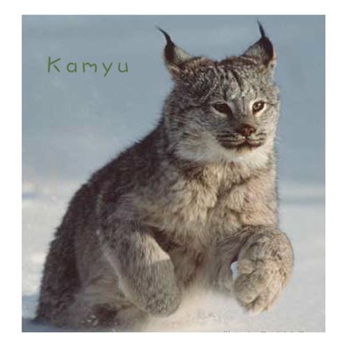 Kamyu Music's avatar