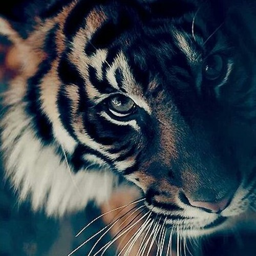 little_tiger's avatar