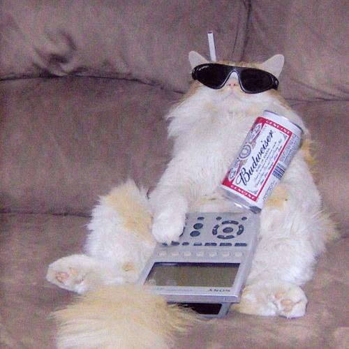 Bjorn Bjorn's avatar