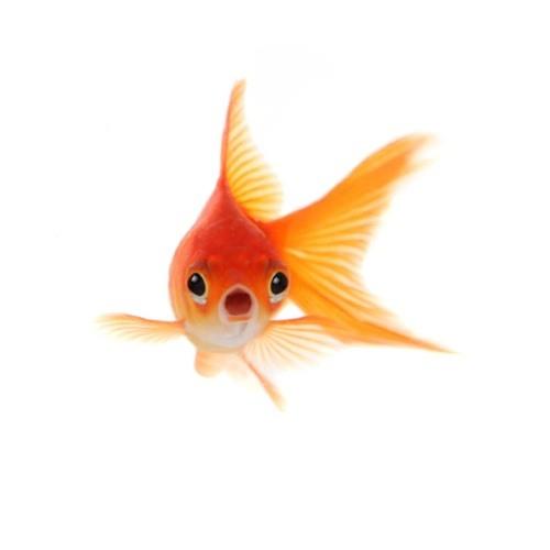 Caitland's avatar