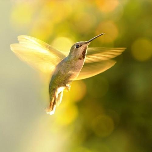 10,000 Hummingbirds's avatar
