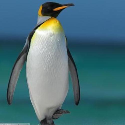 Its A Bert's avatar