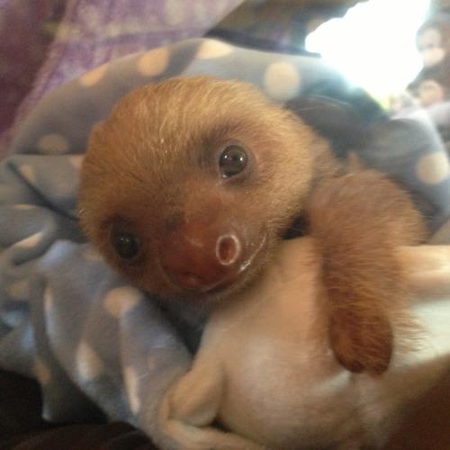 Baby Echelon's avatar