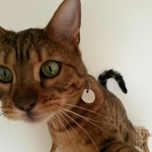 Yashenka's avatar