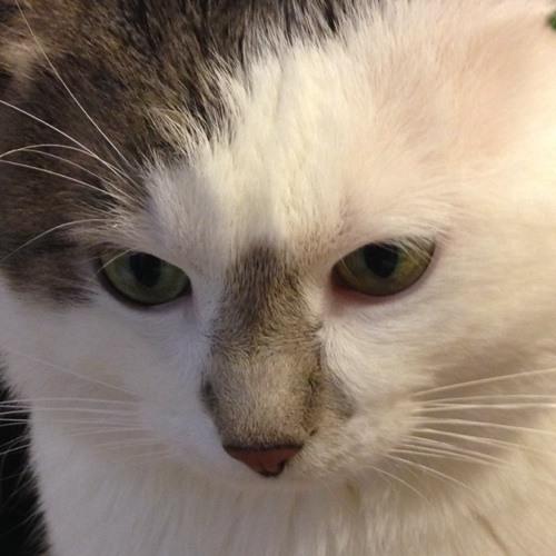 cezar1501's avatar