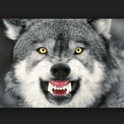 Wolf_of_the_Dark's avatar