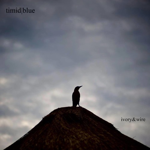 timidblue's avatar