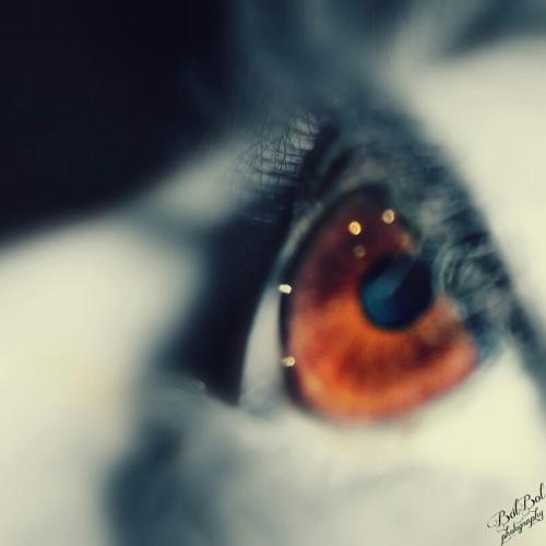 bolbol234's avatar