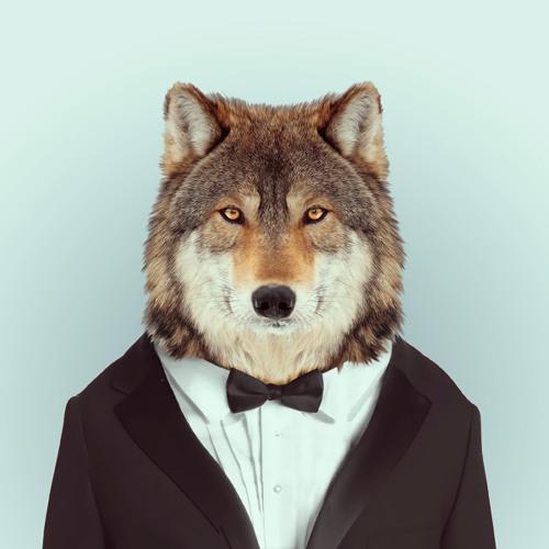 LOUP's avatar