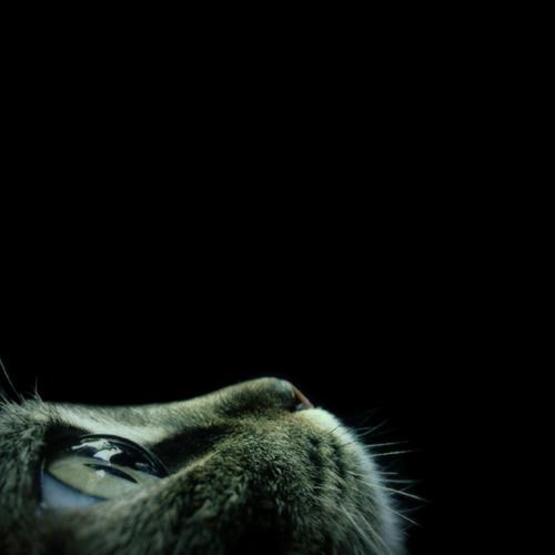GlassKingfisher's avatar