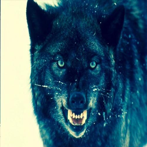 werewolf king's avatar