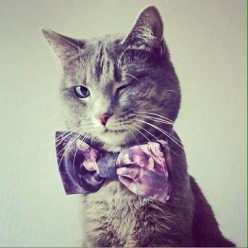 Mister Good Cat's avatar