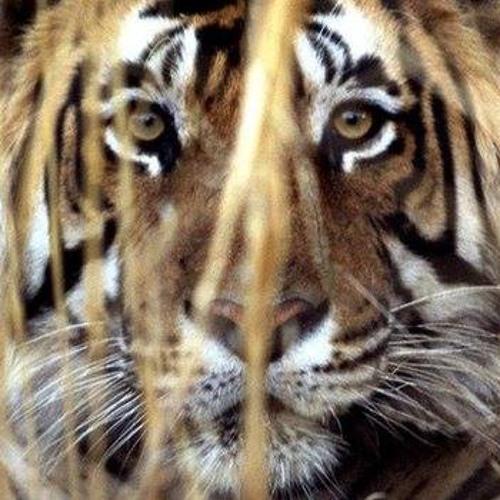 Karanv33r's avatar