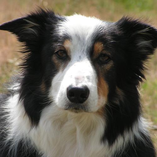 siebet's avatar