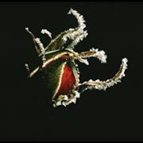 mioltra's avatar