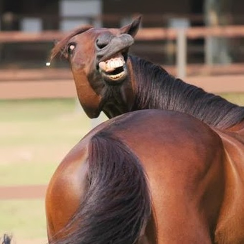 Show Pony 1's avatar