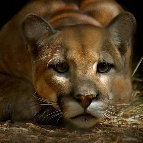 Puma's avatar