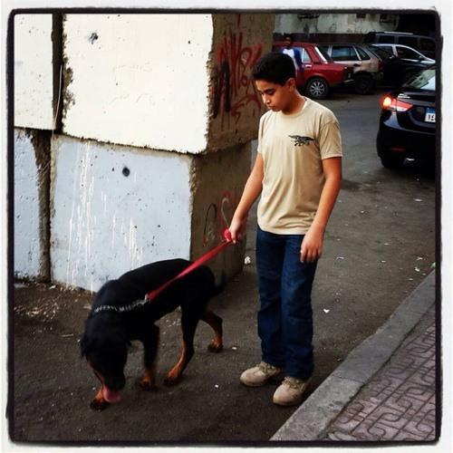 Youssef Hilal 1's avatar