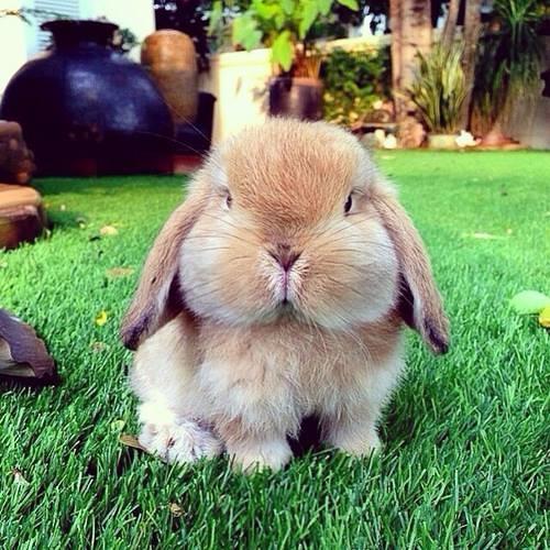Rabbitim's avatar