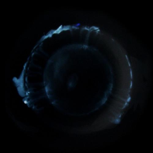 COPPER TRACES's avatar