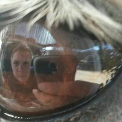 thorsten8791's avatar